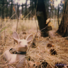 Polaroid Week Day 1 (Celina Innocent) Tags: deer graveyard idahocity grave sx70 sonar polaroid polaroidweek forest