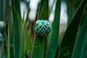 Dubno-0668 (FrankivFOto) Tags: pysanky etnic folk ornamental eggshell