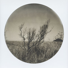 Albany Bulb Branches (H Polley) Tags: polaroidweek polaroid albanybulb albany california californiacoast eastbay roundframe impossible impossibleproject blackandwhite instantfilm