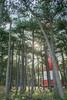 lighthouse on ameland (maximilianschiffer) Tags: leuchtturm lighthouse ameland niederlande holland