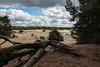 Lommelse sahara (*spectator*) Tags: lommel belgium sand trees
