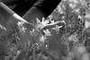 Percepción (luenreta) Tags: pie flores primavera sensorial sentidos percepción suelo tierra bw monocromático 7dwf foot