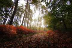 Automne (f.ray35) Tags: automne brume forest autumn wood bretagne illeetvillaine brittany red france