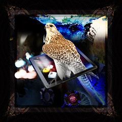 The Hawk eye (mfuata) Tags: hawk şahin eye göz view bakış stance duruş classic klasik bird kuş