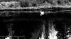 2015-05 Grand Teton Ntl Park (chenhengyu) Tags: 20150520 grandteton jacksonhole memorialday snakeriver utah wyoming yellowstone