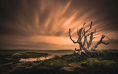 (Lens Cap1) Tags: moonlit auckland newzealand beachlands