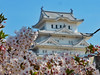 Shirasagijo XV (Douguerreotype) Tags: cherryblossom blossom buildings bokeh pink castle architecture cherry petals flowers city japan sakura
