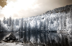 Upside down seasons (Lolo_) Tags: infrared lacbleu lake blue ir infrarouge rock reflection reflet rocher pines pins forêt forest souche root 715nm passy kaamelott cloud nuage hautesavoie