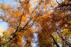 Foliage (Silver_63) Tags: foliage zegna
