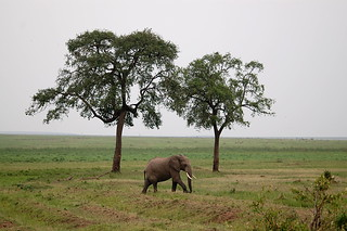 elephant entre des arbres