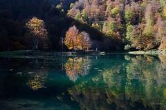 Entre ombre et lumière, Lac de Bethmale, Ariège (lyli12) Tags: automne lac ariège midipyrénées reflet paysage landscape france nikon d7000 arbre