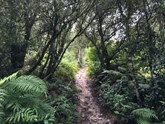 IMG_1676 (Greg and Janine Bell) Tags: waiotapu bayofplenty newzealand nz