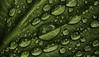 Water Drops (Topolino70) Tags: nokia n8 mobile water drop leaf green fresh vegetable