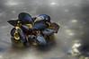 IMGP2727 (jarle.kvam) Tags: oyster shell skjell blåskjell blueoyster shoreline sea blur longexposure raetnationalpark natur blue green norway sørlandet