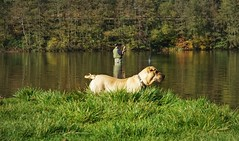 TheDogAndTheFlyFisherman (BphotoR) Tags: dog hund angler flyfisherman flyfishing germany fliegenfischen lake