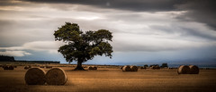 Optimistically Located (Augmented Reality Images (Getty Contributor)) Tags: autumn perthshire scotland strawbales leefilters tree landscape fields bales countryside canon harvest clouds field unitedkingdom gb