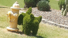 Humorus Topiary. (goldiesguy) Tags: goldiesguy outdoors funny humor dogs sculpture sculptures topiary scenery