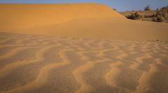 Rajasthan - Jaisalmer - Desert Safari with Camels-45