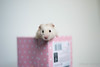 (Earth Rise) Tags: hamster hamsters syrian flowers animal animals