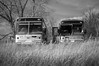 Reality is a ride on the bus. (Fistfulofpowder) Tags: rurex explorer rural abandonedalberta bus black white field grass wheat tree trees bush bushes monochrome mono bw windows door doors glass broken greyhound shadows light dark depth blurry foreground nikkor 35mm f18 nikon d300s prime natural