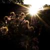 olY/275 .. balcony-henge ! (m_laRs_k) Tags: omd olympus intothesun backlit backlight sun flower 7dwf flora 17mm f22 sunstar chrome camera profile classic balconyhenge friday