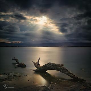 The Lake Tree...