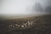 creeping in slowly (STEPtheWOLF) Tags: morning fall autumn winter preview frost ice fog mist mountain austria styria canon 5d3 stepthewolf