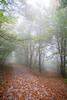 IMG_4059 (Niki.Suppan) Tags: vienna autumn fall october oktober herbst wien wanderung wandern leopoldsberg hügel herbstfarben fog nebel nebelig wanderpfad stadtwanderweg canon eos ef 2470mm 28 f28 dslr slr spiegelreflexkamera vollformat fullframe 5dii