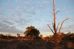 Morning at Mungo National Park (cathm2) Tags: australia nsw outback travel roadtrip morning light sky clouds trees nationalpark