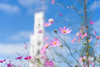 Cosmos (ai3310X) Tags: carlzeiss ycontax planar t1450 polarfilter 昭和記念公園 秋桜 コスモス cosmos