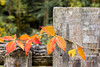 Fall in the Smokey Mountains (Kathy~) Tags: nationalpark usnationalpark fall autumn red leaf leaves fence wood dof 15challengeswinner
