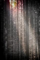 Licht und Schatten (uschmidt2283) Tags: farben licht a7r bäume herbst botanik laub schmetterlinge christes wald
