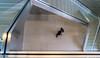 Steve - Hongkong 86/188 (*Capture the Moment*) Tags: applestore architektur fenster fotowalk hongkong menschen people sonya7m2 sonya7mii sonya7mark2 sonya7ii sonyfe70200mmf28gmoss sonyilce7m2 windows