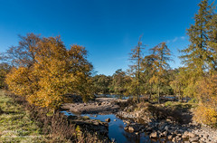 Autumn Colours on Tees between Low Force and High Force 4 (Richard Laidler) Tags: aonb area autumn autumncolour autumncolours autumntints beauty blue bluesky clear color colors colour colourful colours conifers countydurham deciduous fall footpath gold longdistance natural north northeastengland northpenninesaonb outstanding pebbles pennine pennineway pennines river riverbanks rocks shingle sky sun sunny sunshine tees teesdale tints trees uk upper upperteesdale vivid way woodland woods yellow