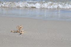 Alone at the beach (dfromonteil) Tags: plage beach vague stream wave sable sand sunny ensoleillé vacances holiday nature decay écume time temps