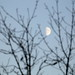 ~⅔ moon
