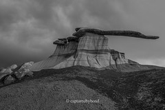_8106900 (captured by bond) Tags: kingofwings newmexico
