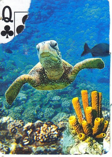 Turtle apc