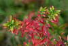 painted by autumn (nelesch14) Tags: fall autumn leaves red painting green contrast macro speckled paintbrush
