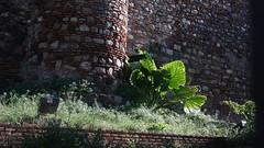 20171029_153510 (uweschami) Tags: spanien espania malaga urlaub stadt alcazaba gibralfaro santaiglesia museopicasso plaza hafen mittelmeer
