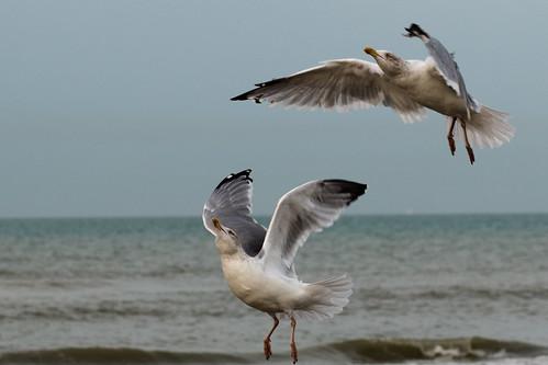 Sky Ballet