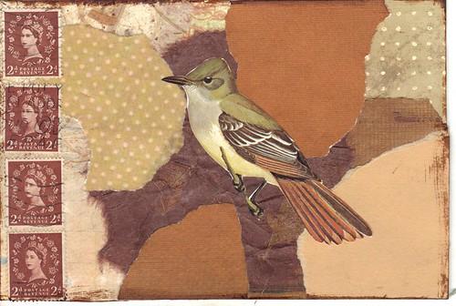 Brown Bird pc