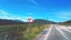 Highlands - Strade diverse (Celeste Messina) Tags: cartello segnale roadsign road strada ontheroad cervo deer stag hart cielo sky azzurro blue celeste nuvole clouds street landscape paesaggio viaggio trip pov puntodifuga vanishingpoint scotland scozia scottish scozzese highlands guidaasinistra asfalto asphalt huawei