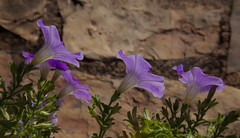 Friday's Flower Power,,, (Rainer Fritz) Tags: mallorca fragile zart
