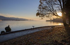 Around The Bend (Clayton Perry Photoworks) Tags: vancouver bc canada fall autumn explorebc explorecanada sunrise leaves trees colour stanleypark seawall