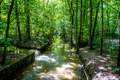 Along the river Isar (Tony Shertila) Tags: 20170826133604 germany bavaria city europe hotel munchen munich outdoor park path road tourist track travel tree woods unterföhring bayern trees forest wood trail deu