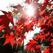 """Westonbirt Arboretum • <a style=""""font-size:0.8em;"""" href=""""http://www.flickr.com/photos/84132664@N06/38166584941/"""" target=""""_blank"""">View on Flickr</a>"""