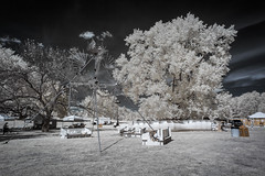 Roots N Blues N BBQ Infrared (Notley Hawkins) Tags: httpwwwnotleyhawkinscom notleyhawkinsphotography notley notleyhawkins 10thavenue clouds rural 2017 september ir infrared park boonecountymissouri stephenslakepark the2017rootsnbluesnbbqfestival rootsnblues rootsnbluesnbbq