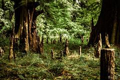 Back to Nature (row.box) Tags: 35mm japan k30 ltd pentax shinjukugyoen greenery grow natural nature park spring woodland geocountry exif:make=pentax exif:isospeed=100 camera:model=pentaxk30 camera:make=pentax geo:lat=35687453 exif:aperture=ƒ35 exif:model=pentaxk30 geostate exif:focallength=35mm geo:lon=139706322 geocity