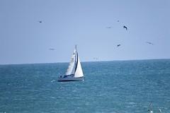 Idyllic!! (rufaro) Tags: sussex england sailboad sea water boat birds